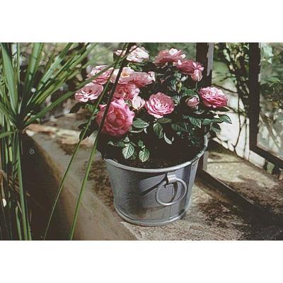 Bac À Planter Zinc N°2 - 13L Zinc Et Jardin Ko-802