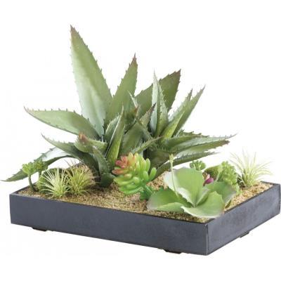 Tableau végétal avec cadre - Succulentes - 30 x 20 cm