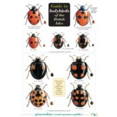 Guide to Ladybirds of the British Isles - [Version Originale]