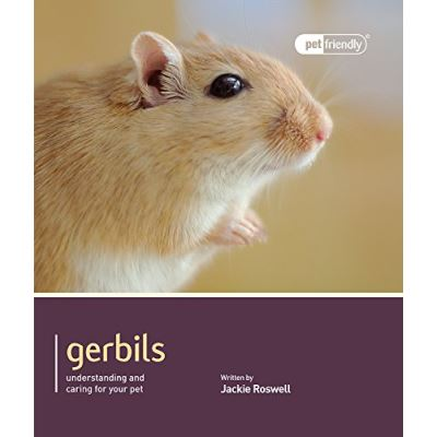 Gerbils - Pet Friendly