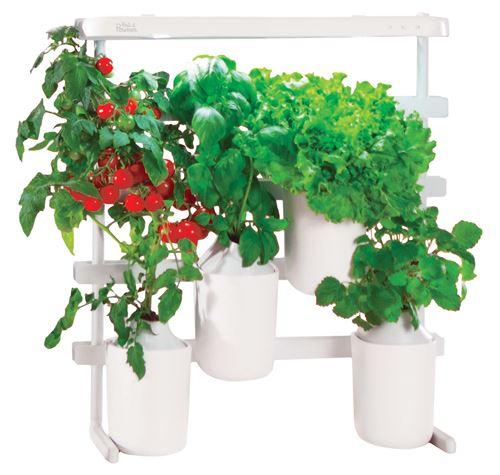 Capsule Prêt à Pousser Mini-Tomates