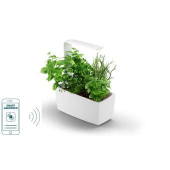Potager D Interieur Tregren Connecte 6 Plantes Blanc Jardiniere