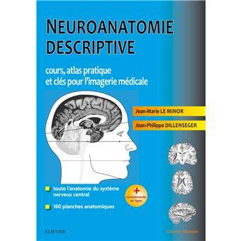 Neuroanatomie descriptive