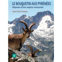 Bouquetin aux Pyrénées