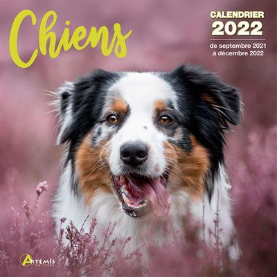 Calendrier Animaux 2022 Calendrier Chiens 2022   broché   Collectif   Achat Livre | fnac