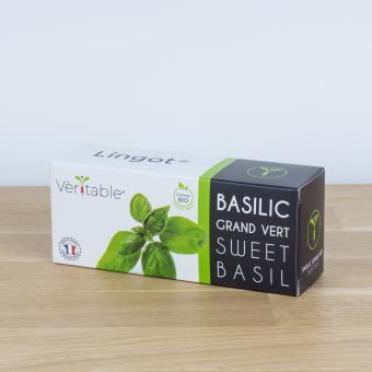 Lingot pour potager Véritable Basilic Grand Vert Bio