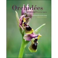 Orchidées sauvages de nos régions