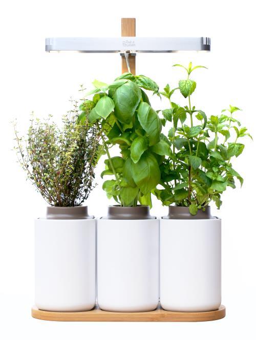 Mini Potager D Interieur Lilo Pret A Pousser Jardiniere Bac