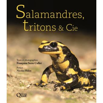 Salamandres, tritons et Cie