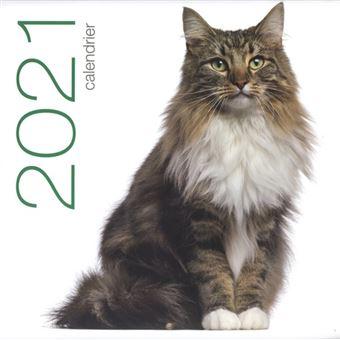 Calendrier mural 2021   Chats   broché   Collectif   Achat Livre