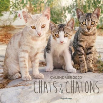 Calendrier Chat 2020.Calendrier Mural Chats Chatons 2020