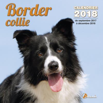 Calendrier 2018 Border collie