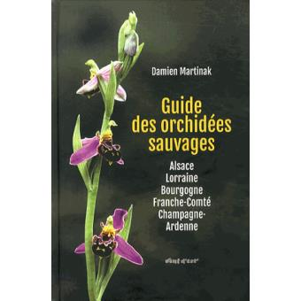 orchidee sauvage en champagne