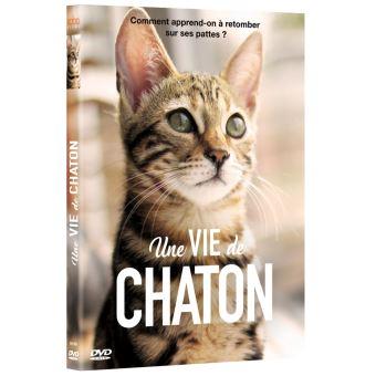 Une vie de chaton DVD