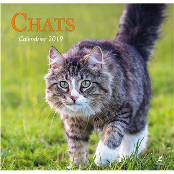 Calendrier Ea.Calendrier 2019 Chats