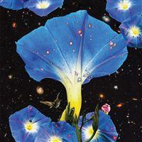 Nighttime Birds and Morning Stars - CD