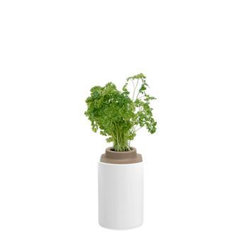 capsule de persil plat pour lilo pr t pousser plante graine bulbe achat prix fnac. Black Bedroom Furniture Sets. Home Design Ideas