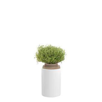 capsule de thym pour lilo pr t pousser plante graine bulbe achat prix fnac. Black Bedroom Furniture Sets. Home Design Ideas