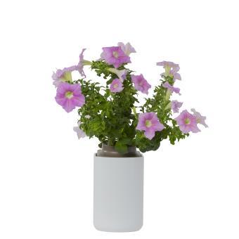 capsule de p tunia pour lilo pr t pousser plante graine bulbe achat prix fnac. Black Bedroom Furniture Sets. Home Design Ideas