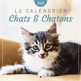 Le calendrier des Chats & Chatons 2021   broché   Editions 365