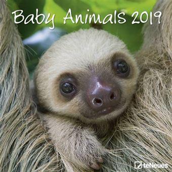 Baby Dieren - Baby Animals Kalender 2019