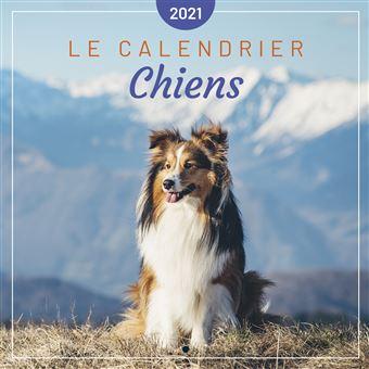Le calendrier des Chiens 2021   broché   Editions 365   Achat