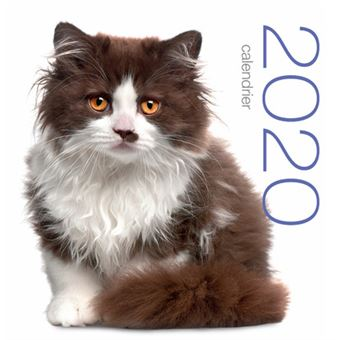 Calendrier Chat 2020.Calendrier Mural 2020 Chats