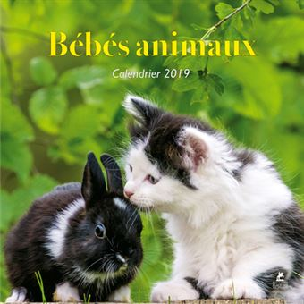 Calendrier Animaux.Calendrier 2019 Bebes Animaux