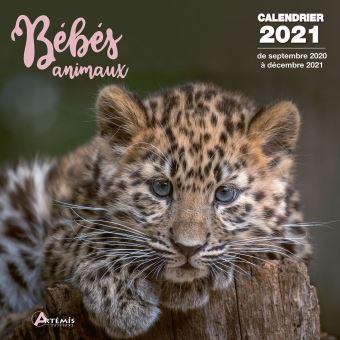 Calendrier 2021 Animaux Calendrier Bébés animaux 2021   broché   Collectif   Achat Livre