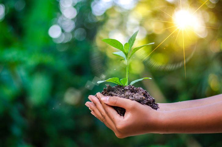 Dicas para uma vida (mais) sustentável