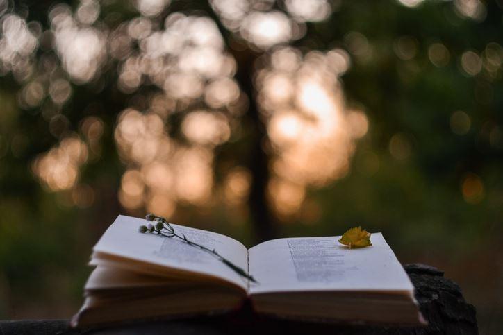 6 Livros para quem tem alma de poeta