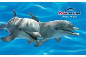 zoomarine_755x470