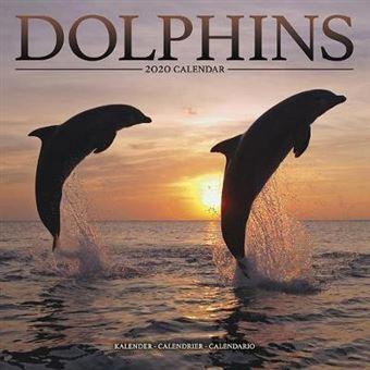 Dolphins 2020 Calendar