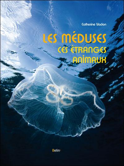 Les méduses, ces étranges animaux